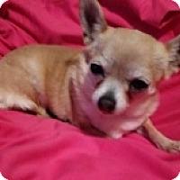 Adopt A Pet :: Mara Jo - Mesa, AZ