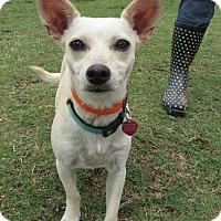 Adopt A Pet :: Molly - McKinney, TX