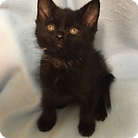 Adopt A Pet :: Russell - Colorado Springs, CO