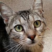 Adopt A Pet :: Bradford - Sarasota, FL