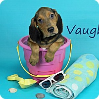 Adopt A Pet :: Vaughn - Joliet, IL