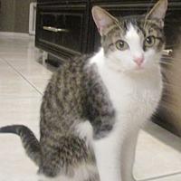Adopt A Pet :: Gigi - Gilbert, AZ