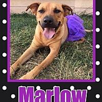 Adopt A Pet :: Marlow - Great Bend, KS