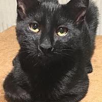 Adopt A Pet :: Oakley - Toms River, NJ