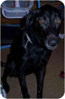 Labrador Retriever Mix Dog for adoption in Richmond, Virginia - Roxie
