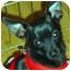 Photo 1 - Chihuahua Dog for adoption in Quail Valley, California - Cowboy