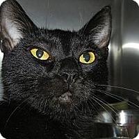 Adopt A Pet :: Madison - Miami, FL
