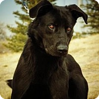 Adopt A Pet :: Hoke Sheila - Cheyenne, WY