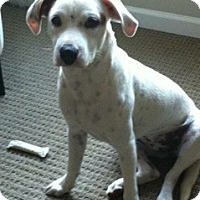 Adopt A Pet :: Macy - Adoption Pending - Vancouver, BC
