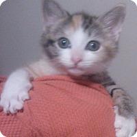 Adopt A Pet :: Gelato - Lawrenceville, GA