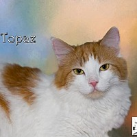 Adopt A Pet :: Topaz - Albuquerque, NM