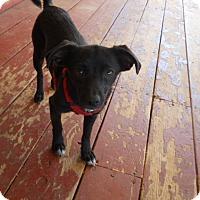 Adopt A Pet :: Millie - dewey, AZ
