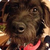 Adopt A Pet :: Kiley - Murrells Inlet, SC