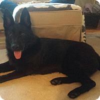 Adopt A Pet :: Thea - Burlington, NJ