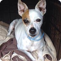 Adopt A Pet :: Gracie Love in Longview, TX - Austin, TX