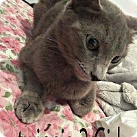 Adopt A Pet :: TWINNIE 2 - Brea, CA