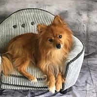 Adopt A Pet :: Parker 2017 - Dallas, TX