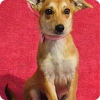 Adopt A Pet :: **QUINCEY** - Mukwonago, WI