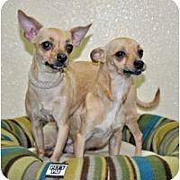 Adopt A Pet :: Nino - Port Washington, NY