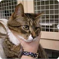 Adopt A Pet :: Hardy - Jacksonville, FL