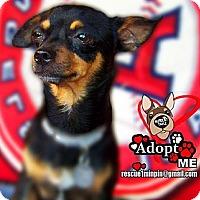 Adopt A Pet :: Snickers - Huntington Beach, CA