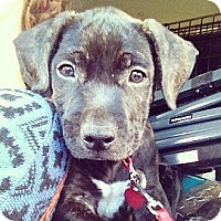 Adopt A Pet :: Hilo - Honolulu, HI