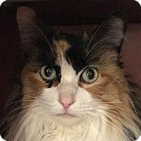 Adopt A Pet :: Callie - Winchester, CA