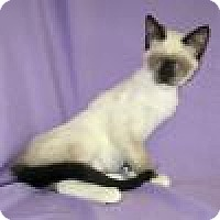 Adopt A Pet :: Kendra - Powell, OH