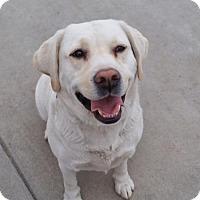Adopt A Pet :: Seri - La Mirada, CA