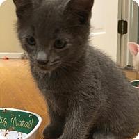 Adopt A Pet :: Buzz - River Edge, NJ