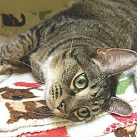 Adopt A Pet :: Needles - Lakeland, FL