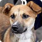 Adopt A Pet :: Dutch! Ready for Play!