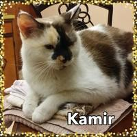 Adopt A Pet :: Kamir - Bradenton, FL