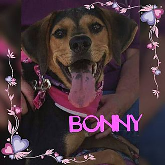 Hound (Unknown Type) Mix Dog for adoption in Youngstown, Ohio - Bonny