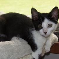 Adopt A Pet :: Vi - Owatonna, MN