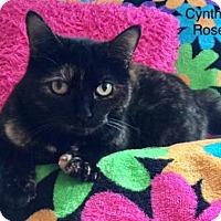 Adopt A Pet :: Cynthia Rose - Newport, KY