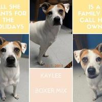 Adopt A Pet :: Kaylee (-) - Owensboro, KY