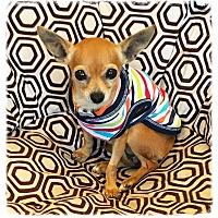 Adopt A Pet :: Tawnie - Los Alamitos, CA