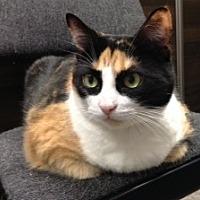 Adopt A Pet :: Tinkerbell - Toronto, ON