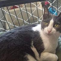 Adopt A Pet :: Harry - Freeport, NY