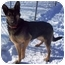 Photo 1 - German Shepherd Dog Mix Dog for adoption in Howes Cave, New York - Duska - On Hold
