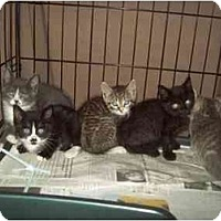 Adopt A Pet :: WE WANT A HOME - Little Neck, NY