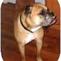 Adopt A Pet :: Magnus - North Haven, CT
