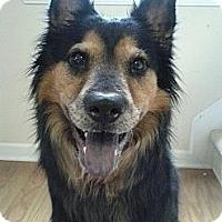 Adopt A Pet :: *Autumn - Winder, GA