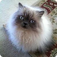 Adopt A Pet :: Jinx - Beverly Hills, CA