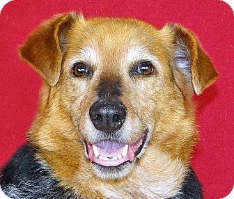 German Shepherd Dog Mix Dog for adoption in Renfrew, Pennsylvania - Gilley