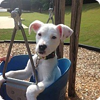 Adopt A Pet :: Roxy - Alpharetta, GA