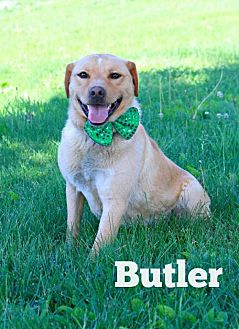 Labrador Retriever Mix Dog for adoption in Marion, Kentucky - Butler
