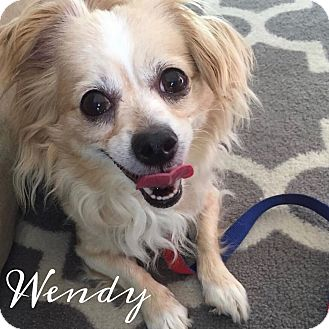 Spaniel (Unknown Type) Mix Dog for adoption in Rancho Santa Fe, California - Wendy