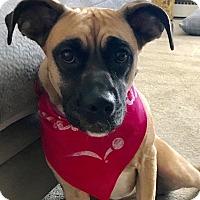 Adopt A Pet :: Hazel - Essington, PA